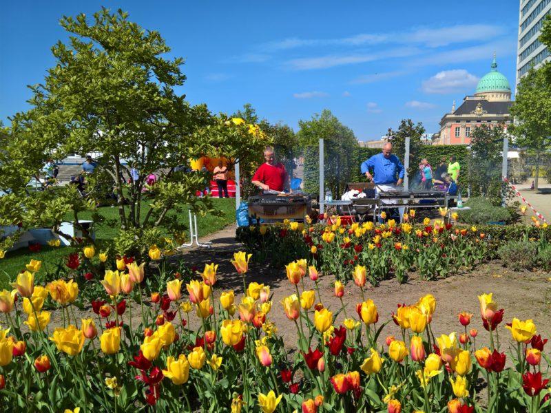 tulpen im sommer lustgarten potsdam mit grillstand beim muko freundschaftslauf