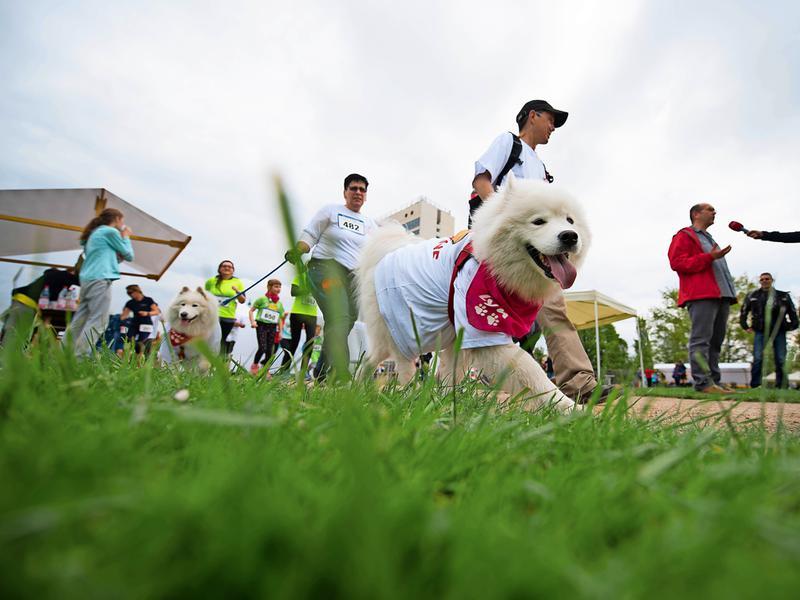 muko freundschaftslauf 2017 lustgarten potsdam läufer mit hunden event von kontraschall